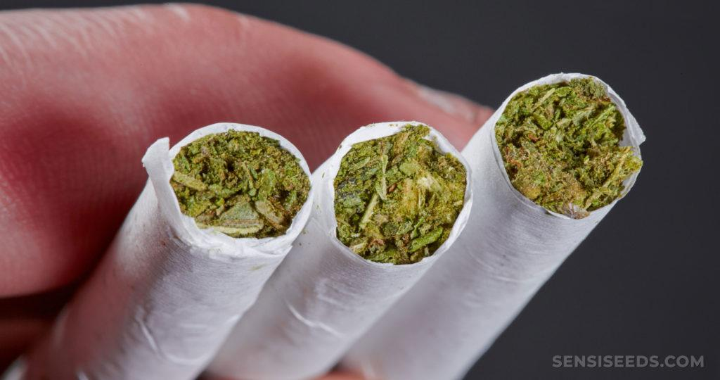 Où trouver CBD à fumer ?